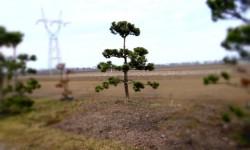 bonsai032