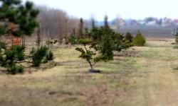 bonsai034