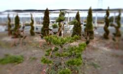 bonsai040