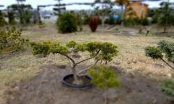 bonsai050