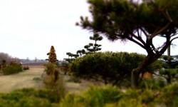 bonsai053