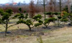 bonsai056